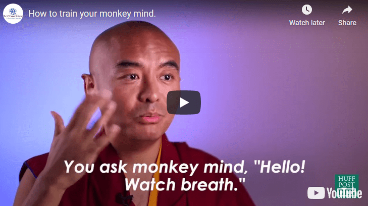 How to train your monkey mind.